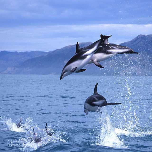 Autotour Nouvelle Zélande - dauphins