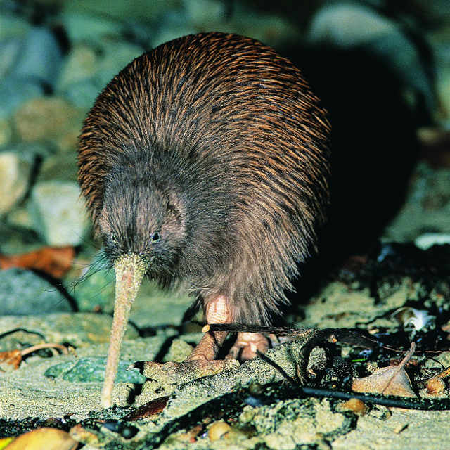 Voyage en Nouvelle-Zélande - Stewart Island
