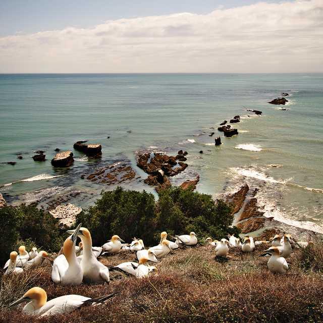 Voyage Ile du Nord de Nouvelle-Zélande - Cape Kidnappers