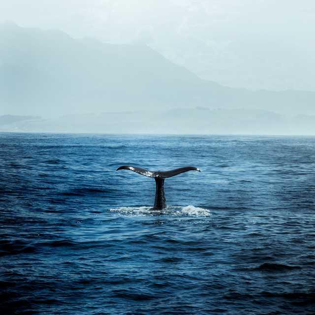 Voyage île du Sud de Nouvelle-Zélande - Baleine à Kaikoura