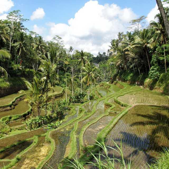 Tour du Monde de Singapour à Mexico - Ubud